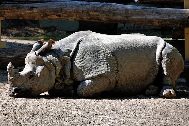 rhino-1580126_640